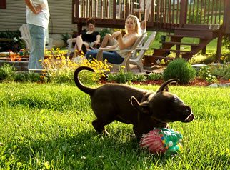Family and puppy enjoying a grassy lawn